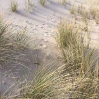 Klik om meer te weten over Yoga en Mindfulness stilte weekend aan het strand 'Stress Reductie'