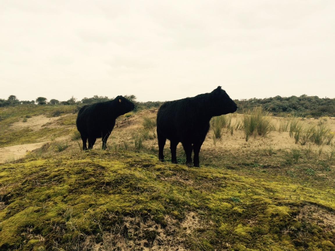 Mindfulness Wandeling door natuurgebied Wassenaarse Slag