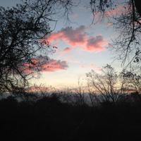 Klik om meer te weten over Nachtegaal Wandeling