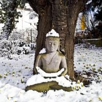 Klik om meer te weten over Vipassana weekendretraite in stilte met Yoga, meditatie en Mindfulness op de Veluwe